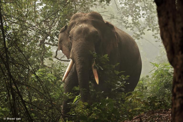 Top National Park for Elephants - Dudhwa