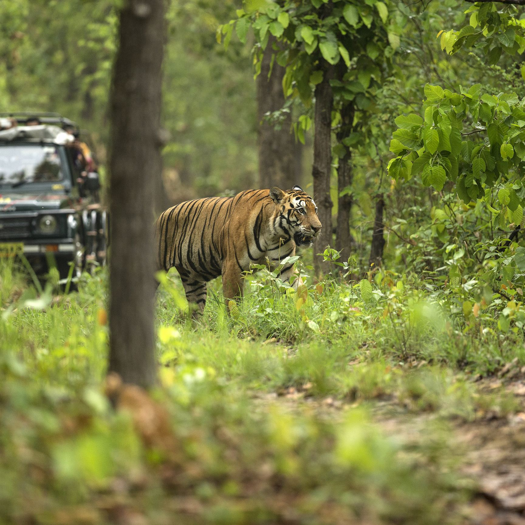 List of wildlife resorts in Indian national parks - India