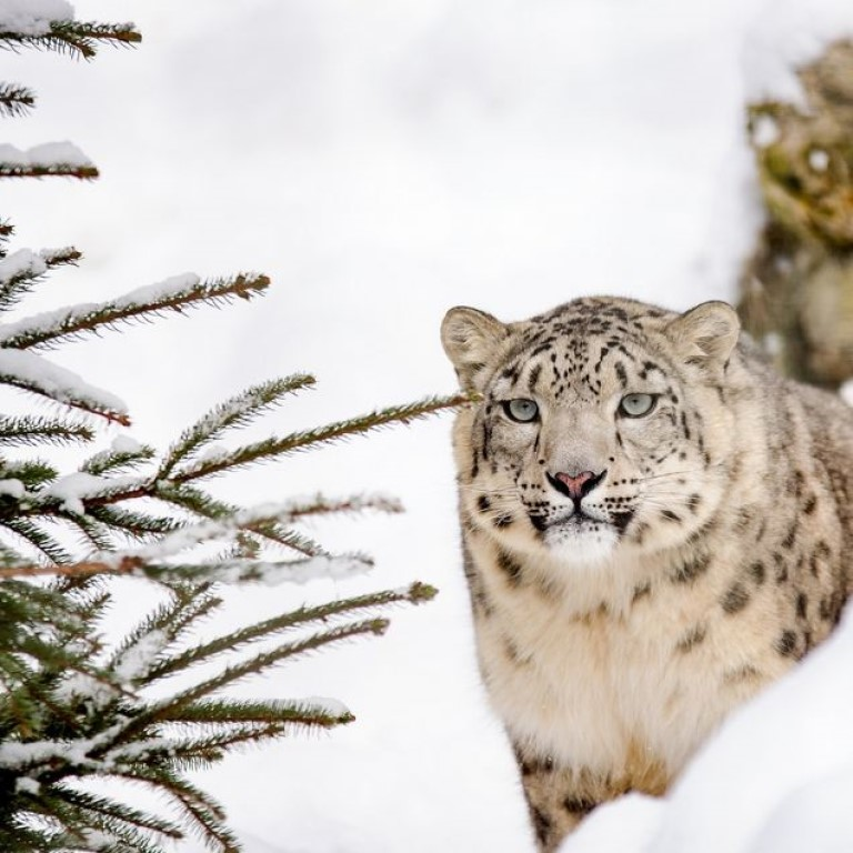 Top National park for snow leopard sighting - Hemis