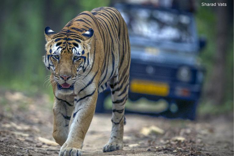 Best Wildlife Tour Packages in India | Best 20 Wildlife Tours