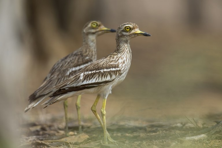 Top pace in India for birding - Dholpur