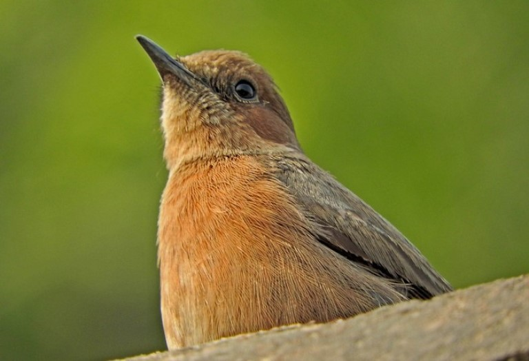 Top pace in India for birding - Pangot