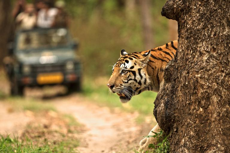 Top National park for tiger - Ranthambhore National park