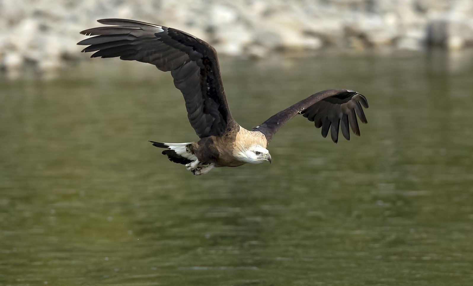 Top National park for birding - Eagle over the river